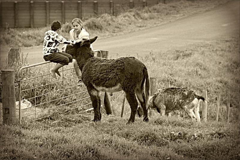 Anja, MJ, children, donkey, sepia