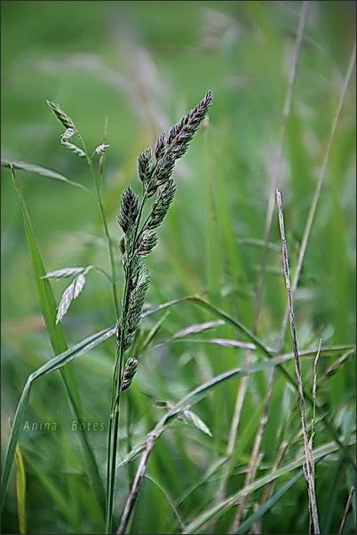 green, grass