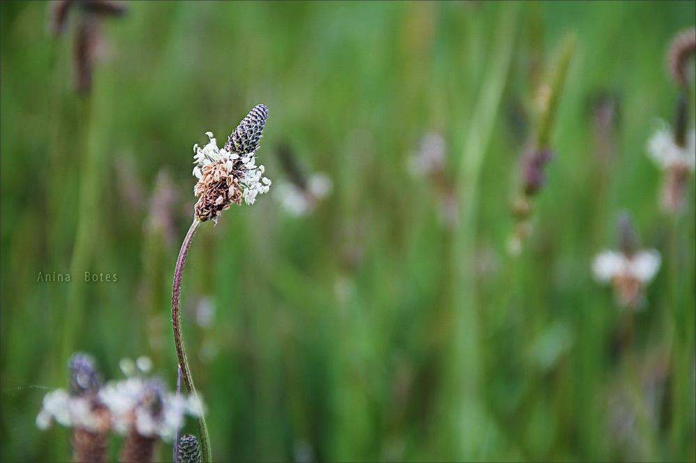 green, grass, plant