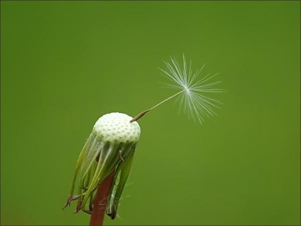 plant, macro