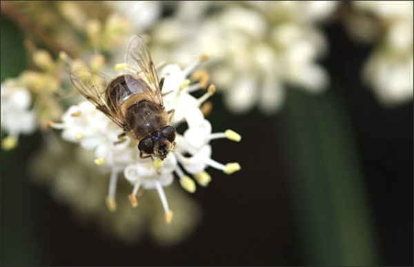 insect, flower