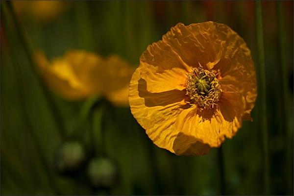 Yellow, flowers