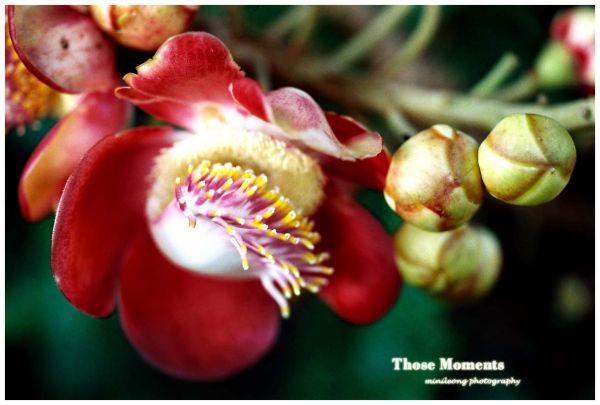 Blooming2