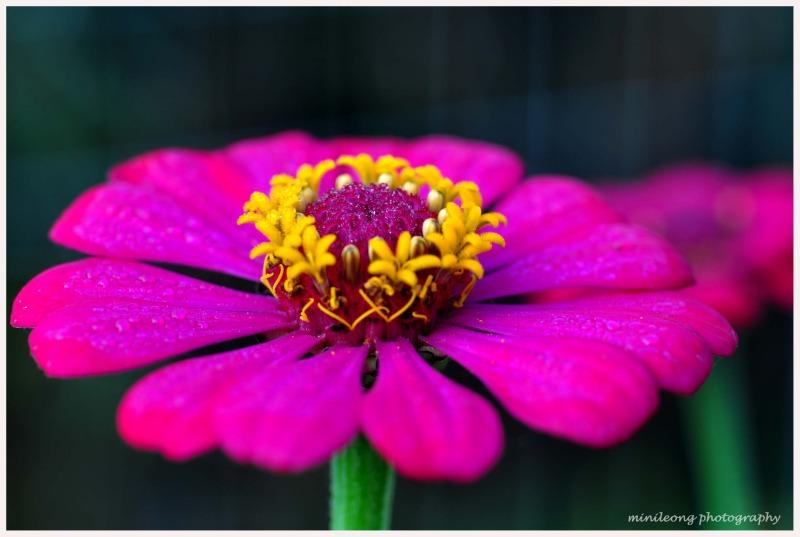 flower at Merapi volcano 1