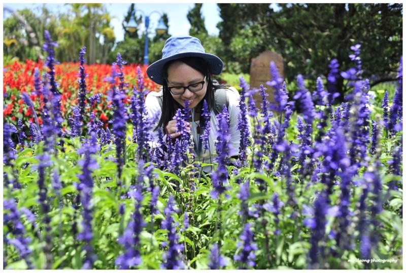 The Laevendar, Flower Garden , Dalat , Vietnam