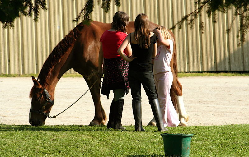 Les filles qui papotent à l'oreille du cheval