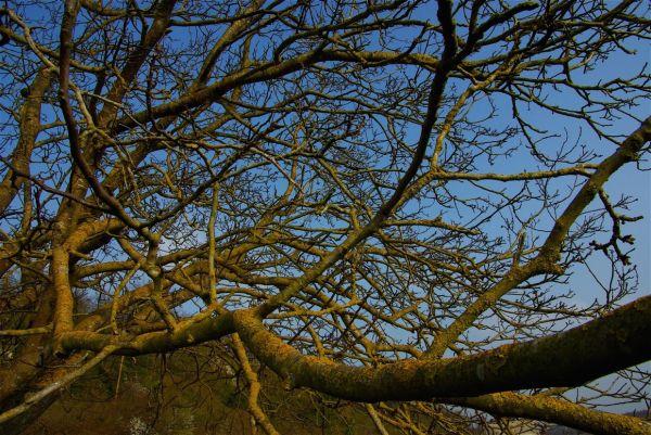 arbres charente
