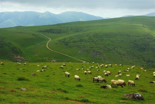 Zone pastorale