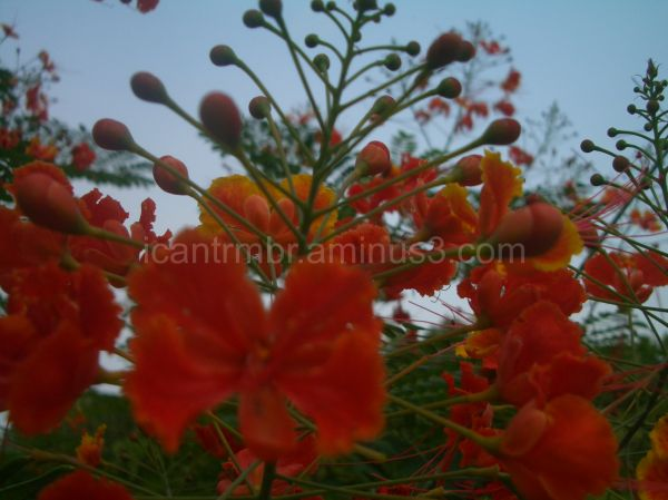 Of Flowers, Greenery and Sky