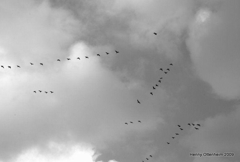 Autumn days birds going south....