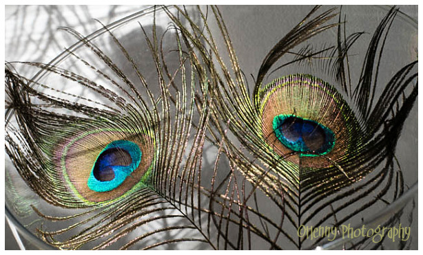Peacock eyes/ Pauwenveren