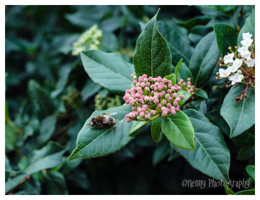 Dizzy bee...