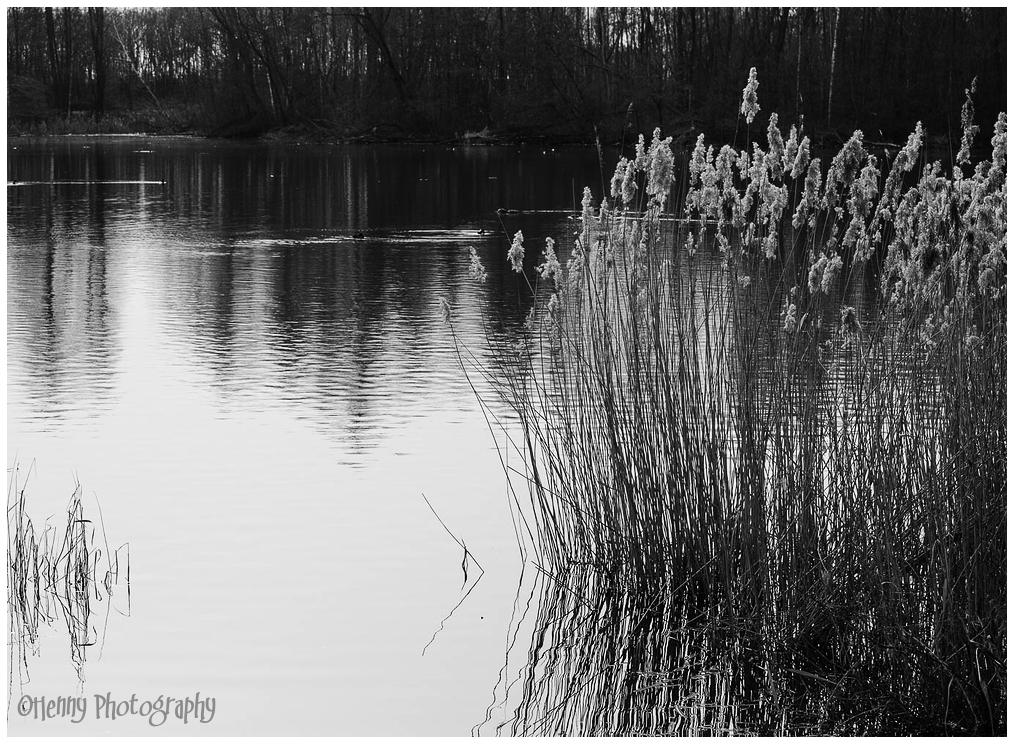 weerspiegeling / reflections