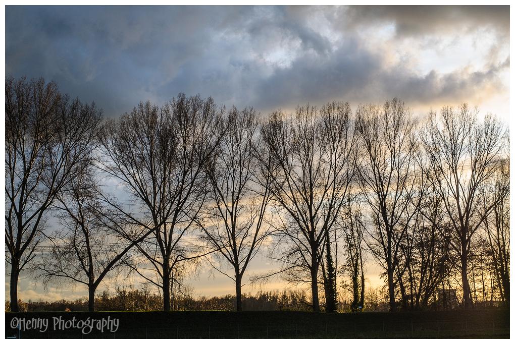 Avondlicht / Eveninglight