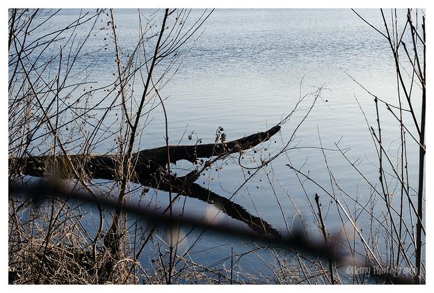 Reflectie...of krokodil?