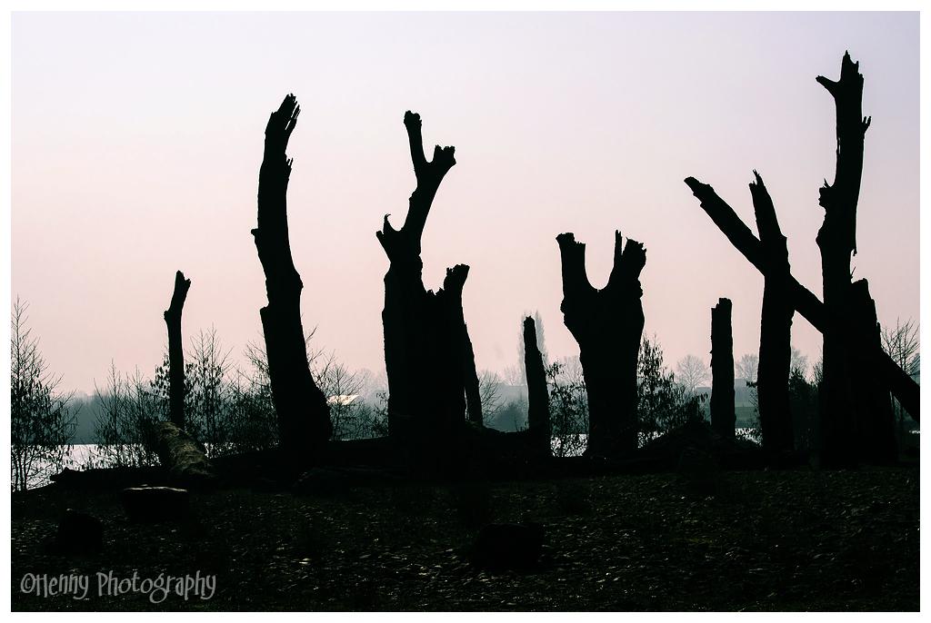 Fossiele bomen / fossil trees