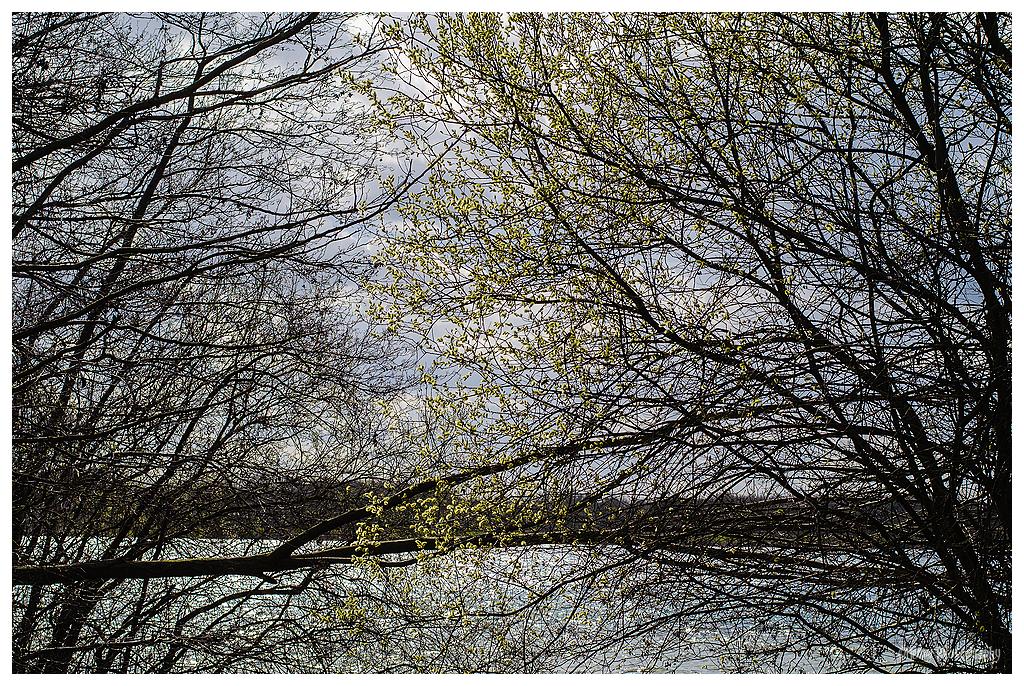 Waterkant met ontluikende lente