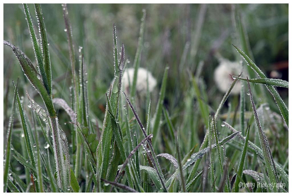 Akker / Meadow