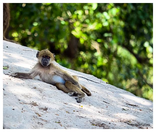 Aapje / Relaxing monkey