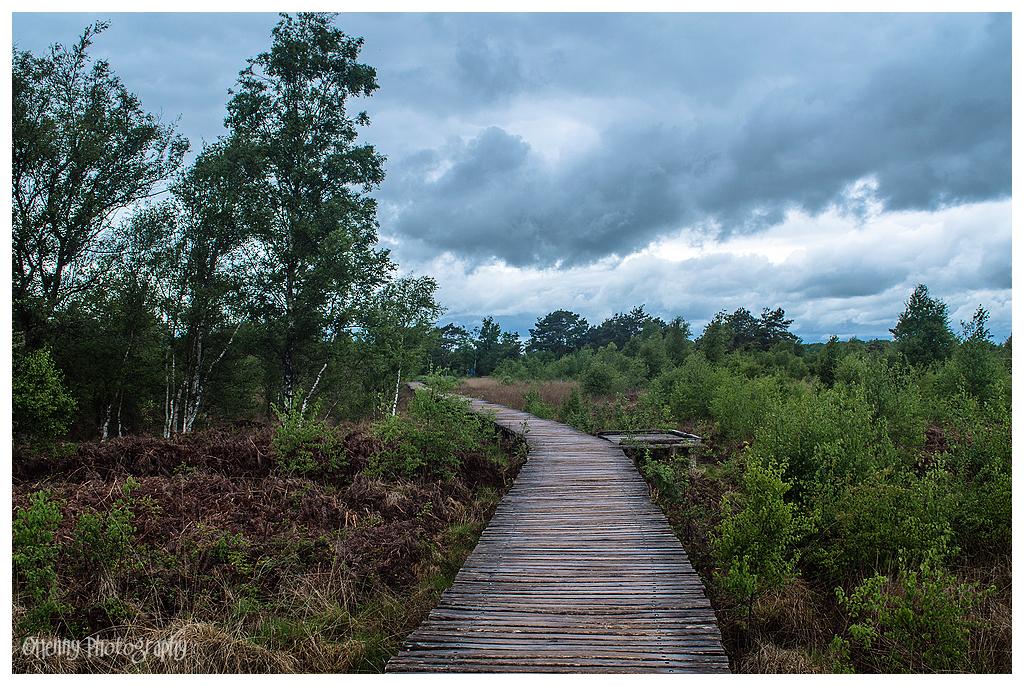 Nationaal Park Groote Peel, knuppelbruggetjes