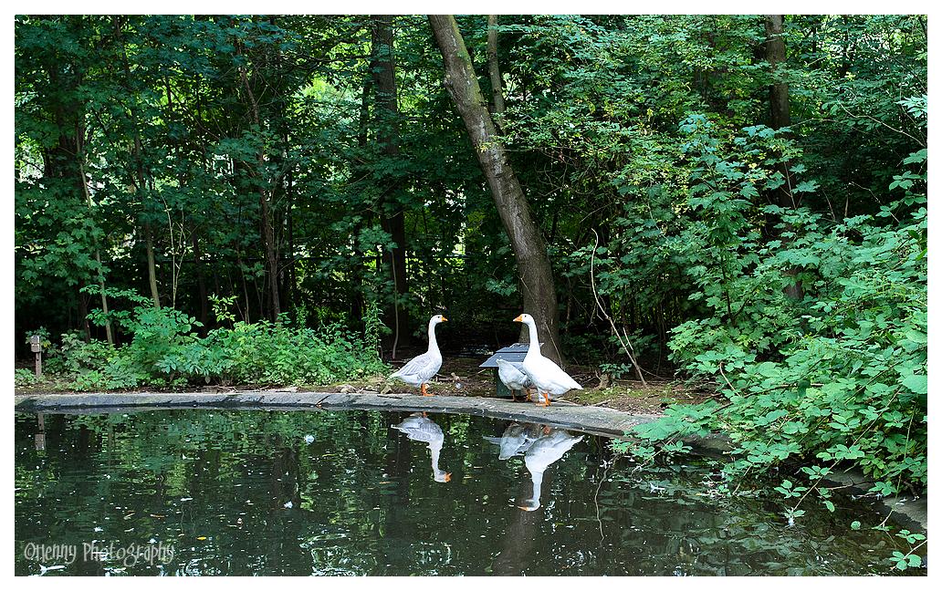 Dubbel gans - double goose