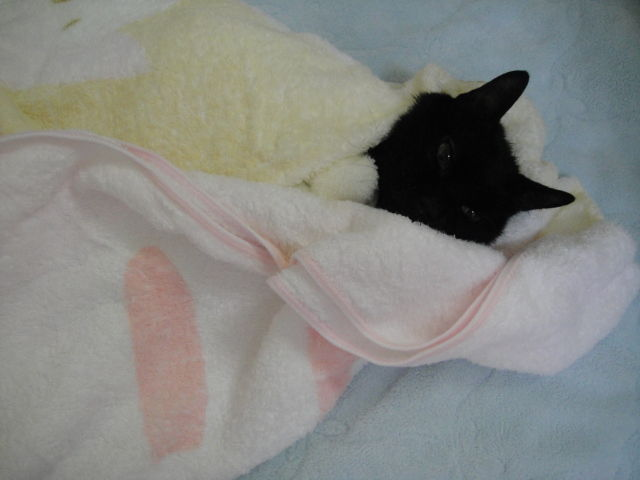 My cat after shampoo