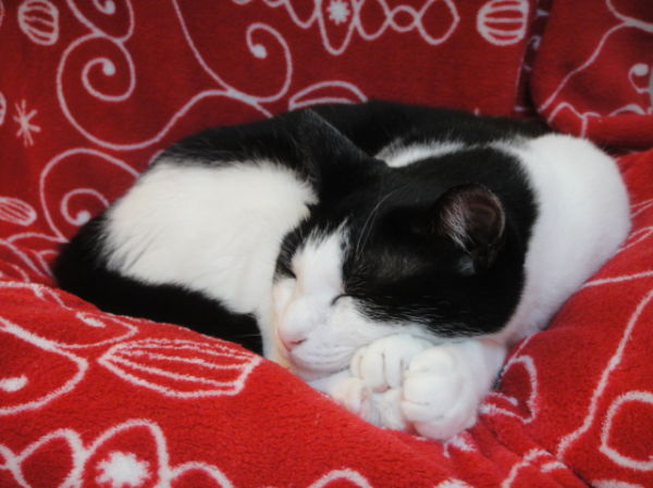My cat, Lun-chan, asleep on his favorite chair
