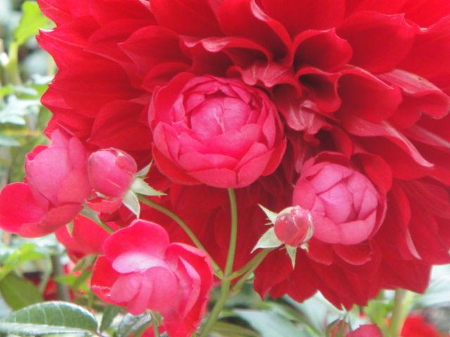 Flowers Garden Marunouchi