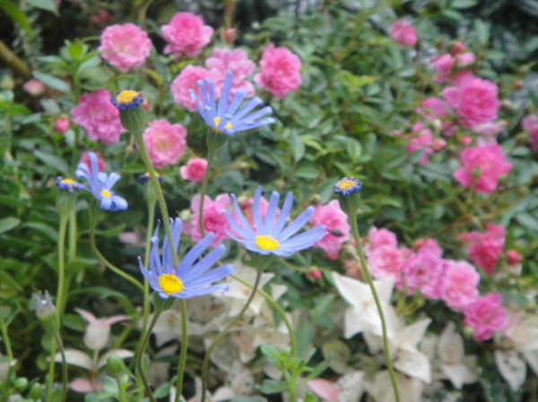 Pink and blue little flowers