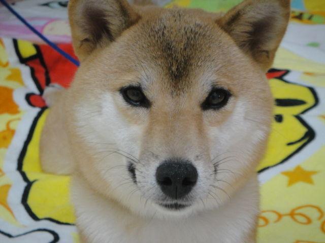 A very pretty dog named Luka-chan