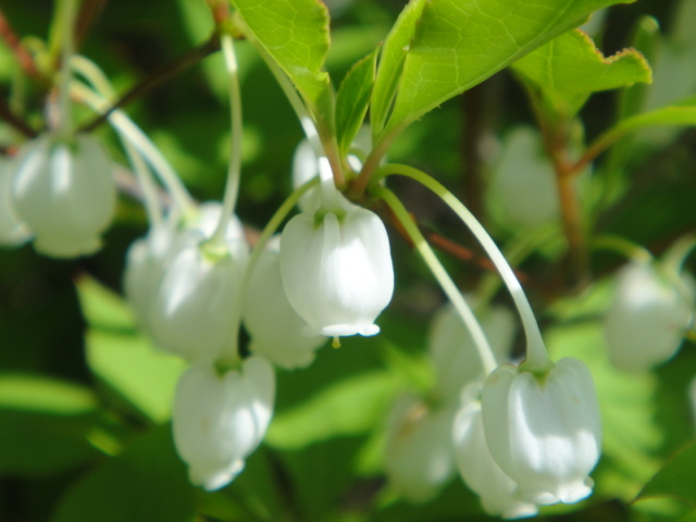 White Little Flowers