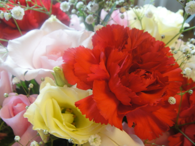 Mother's Day Carnations