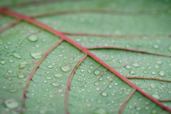 पहिला पाऊस - The First Rain