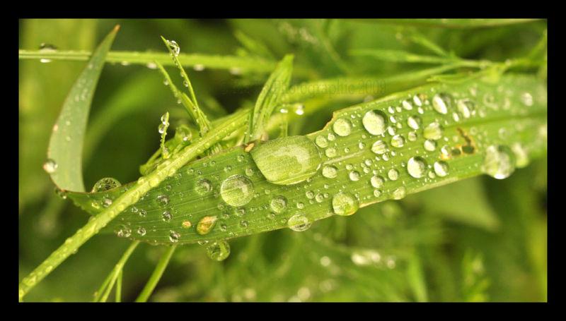Leaf in the Rain