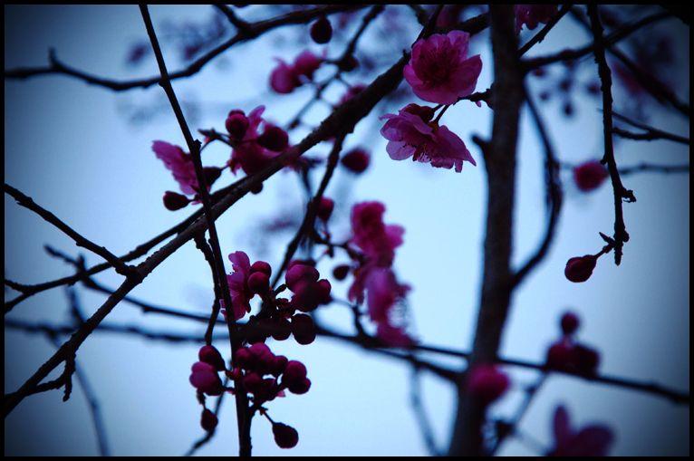 Nearly Spring