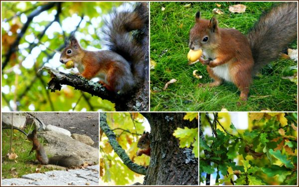 Squirrels . . .
