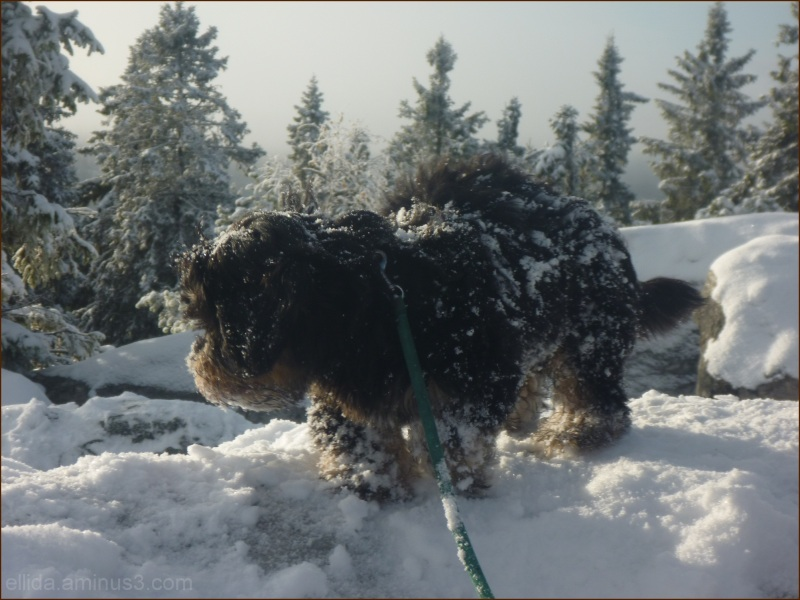 Our Aatu doggy ♥