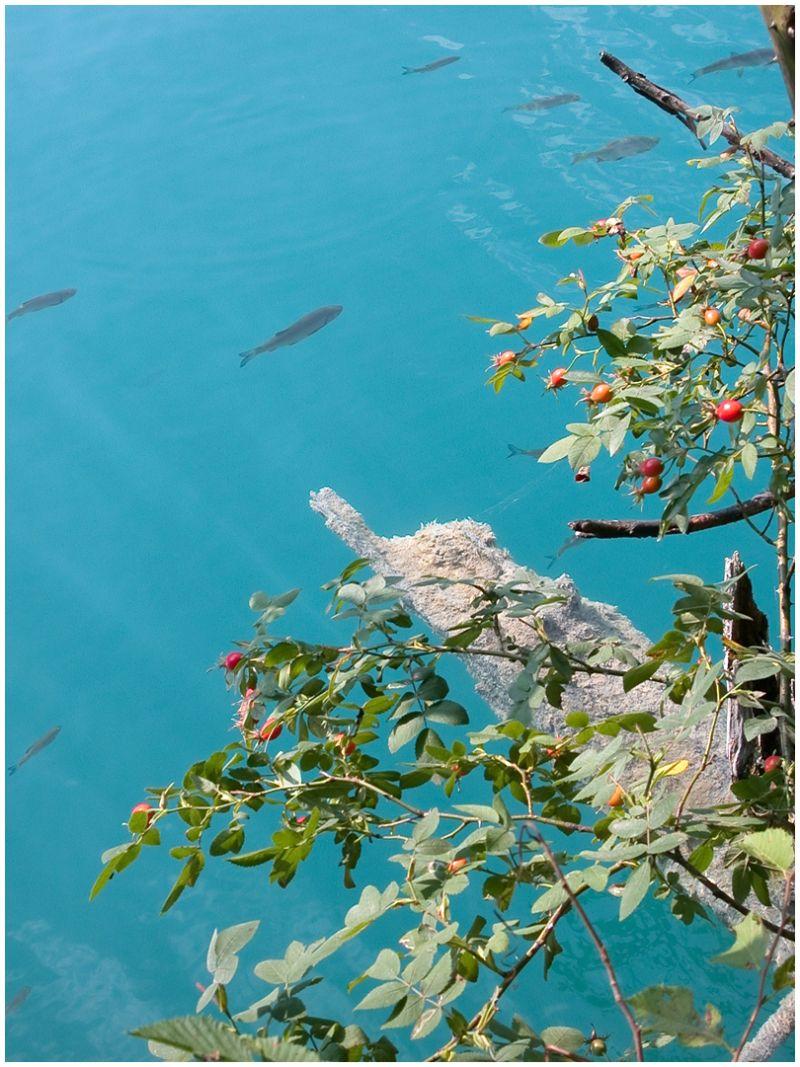 Japanese alike view in Plitvice Jezera
