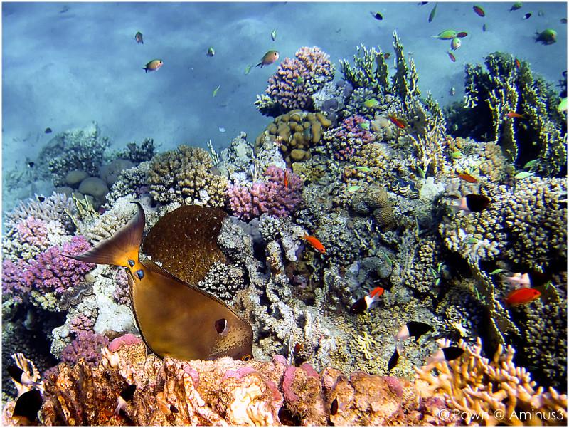 Medium shot Brayka reef