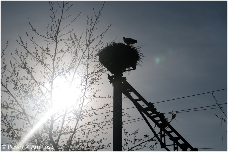 Stork on top of the railroad