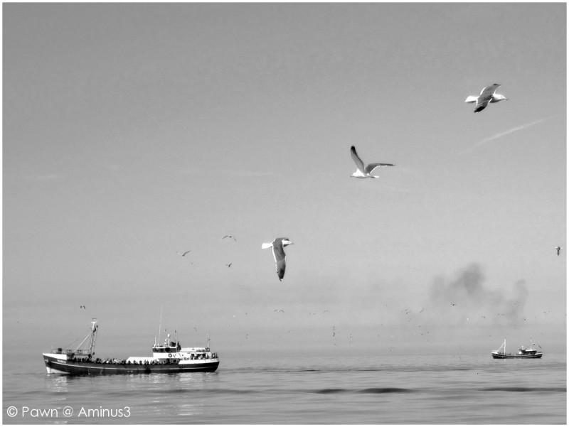 Fishing trips at sea
