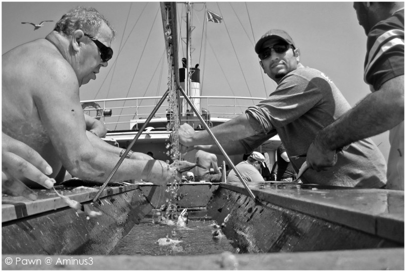 Cleaning mackerels