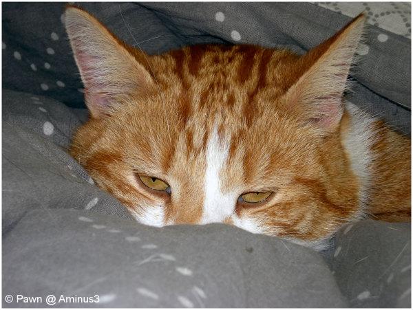 My tomcat Tommie