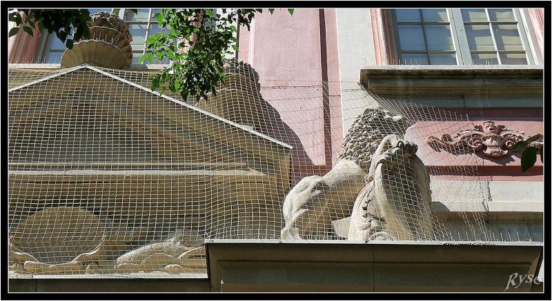 Comme un lion en cage