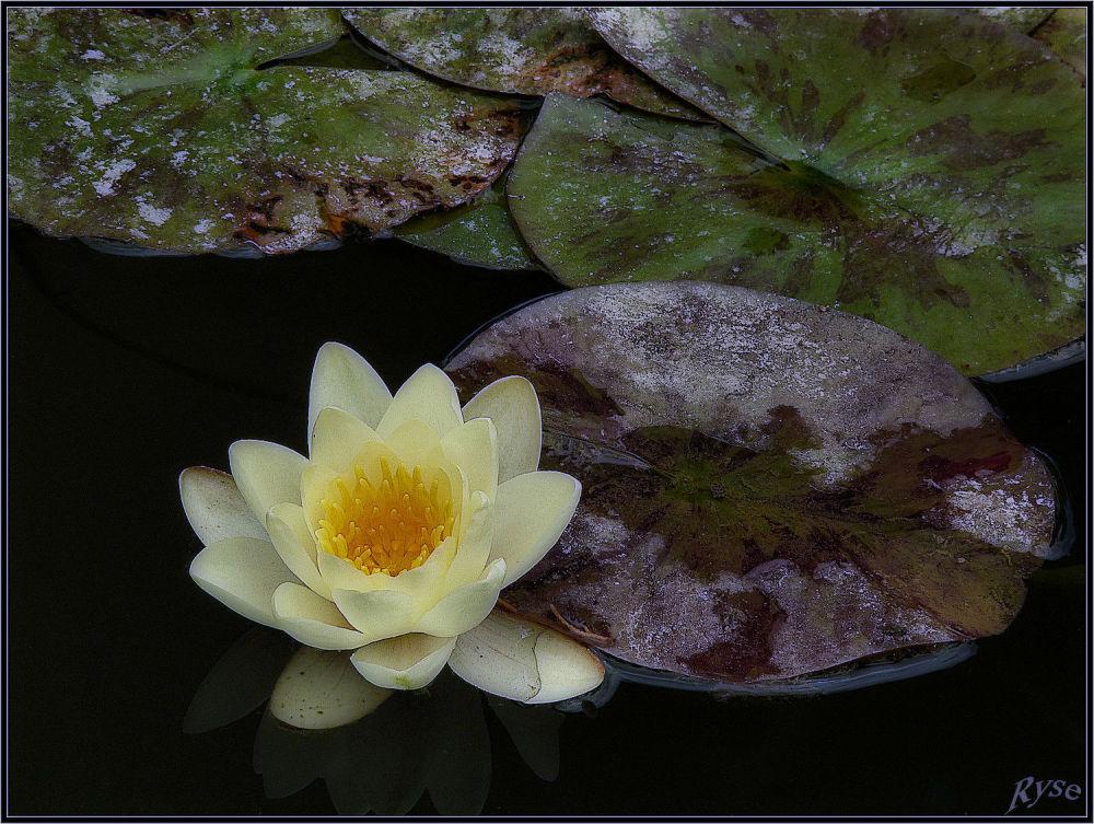 Je reste zen....