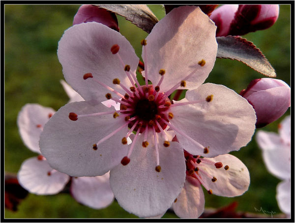 Le printemps est arrivé, sors de ta maison !