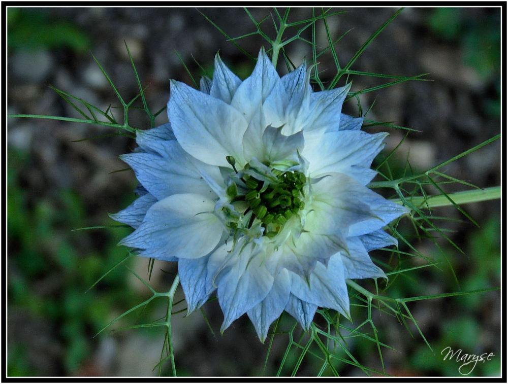 Je suis (toujours) fleur bleue