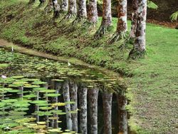 L'eau par les racines