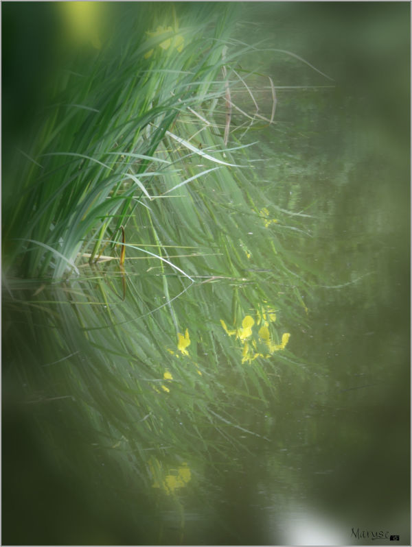 Iris-reflets