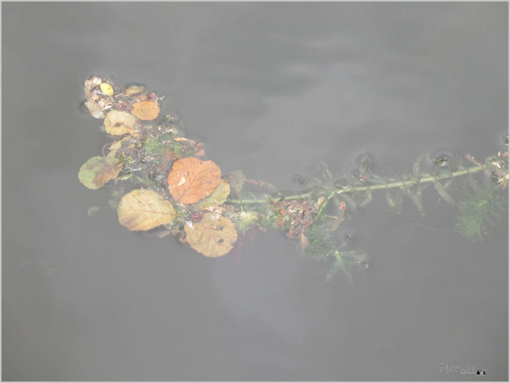 Bouquet de mer...